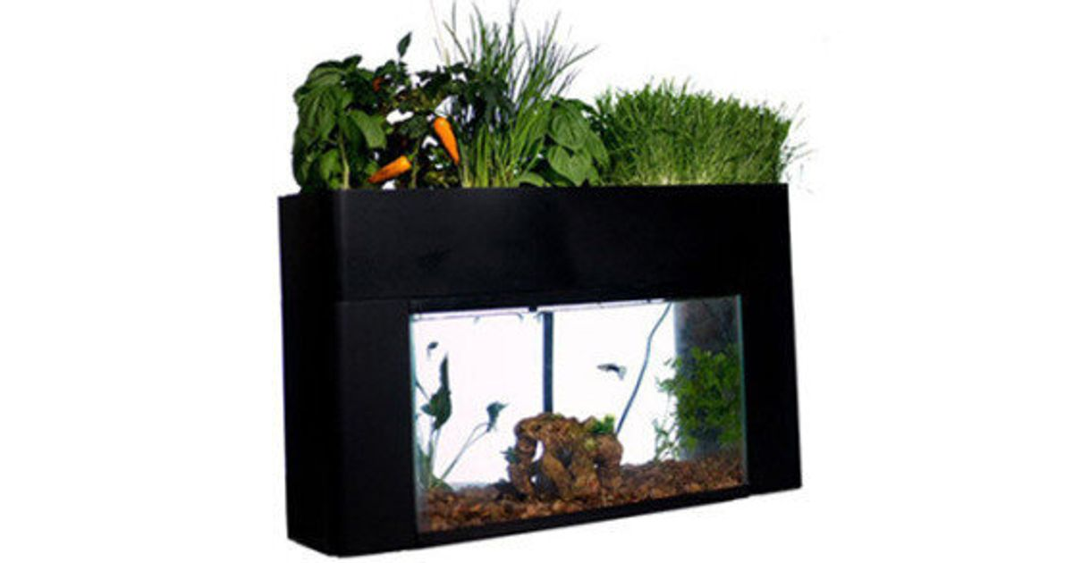 Aquaponics Is A 'Growing' Trend   HuffPost Canada