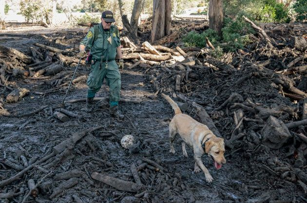 A search and rescue dog is guided through properties after a mudslide in Montecito,