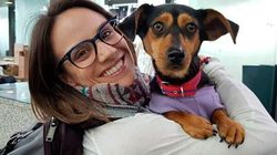 Canadian Olympian On A Mission To Rescue Dogs From