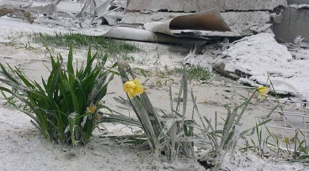 Flowers growing on the Pendergasts' property after the