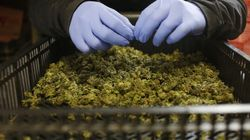 Trump Could Use NAFTA To Bully Canada's Emerging Weed