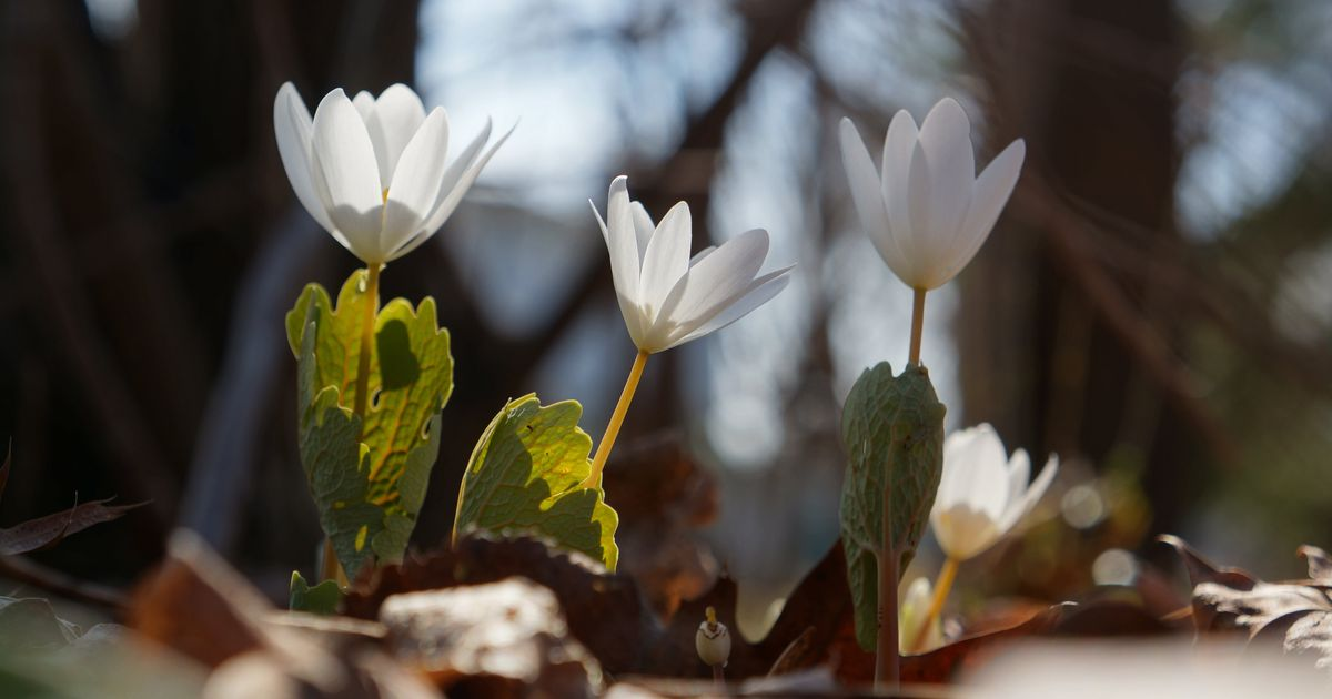 The 1st Delightful Signs That Spring Has Sprung Across Canada