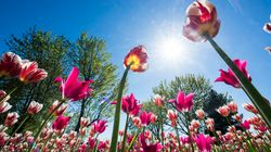 How To Get The Best Pic At Ottawa's Tulip