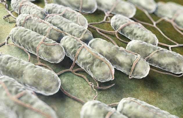 A culture of Salmonella bacteria on an organic surface.