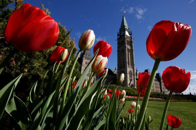 Tulips frame the Peace Tower on Parliament Hill in Ottawa, on May 14,