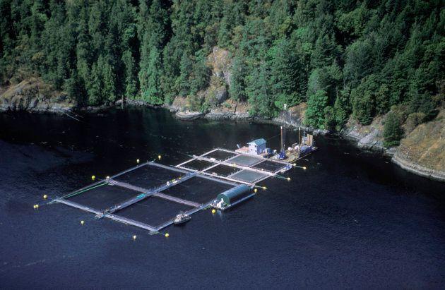 Atlantic salmon fish farm near Vancouver Island,