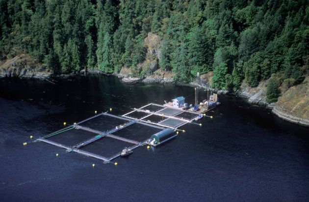 Atlantic salmon fish farm near Vancouver Island, B.C.