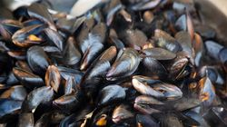 Scientists Find Traces Of Opioids In Mussels Off B.C.