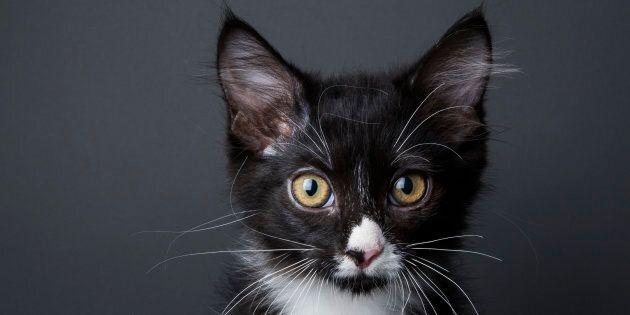 Edmonton Humane Society Forgot Cats Inside A Car For 22 Days