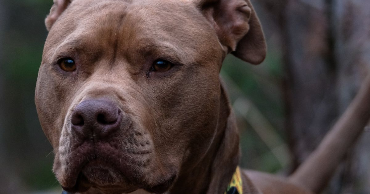 Quebecs Proposed Dangerous Dog Law Ditches Breed Specific