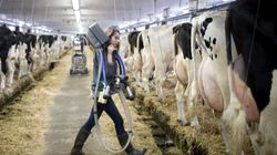 Trump Aims To Wipe Out Canadian Dairy Industry, Lobby Group