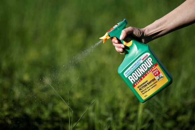 A woman uses a Monsanto's Roundup weedkiller spray without glyphosate in a garden in Ercuis near Paris,...