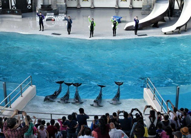 Marineland has faced its share of controversy around animal