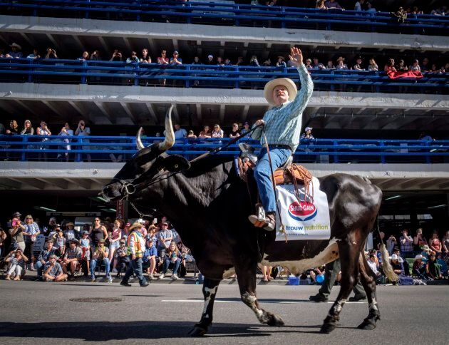 Doug Rogers rides a bull named Wild West Willie during the Calgary Stampede parade on July 6, 2018.