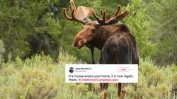 Twitter's #LittleKnownCanadianLaws Are Hilarious, Definitely Not