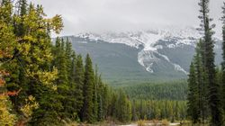 6 Dead In Alberta Highway Crash In Jasper National