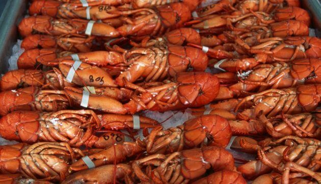 The lobster business is among the most lucrative fisheries in Canada, producing more than $1 billion...