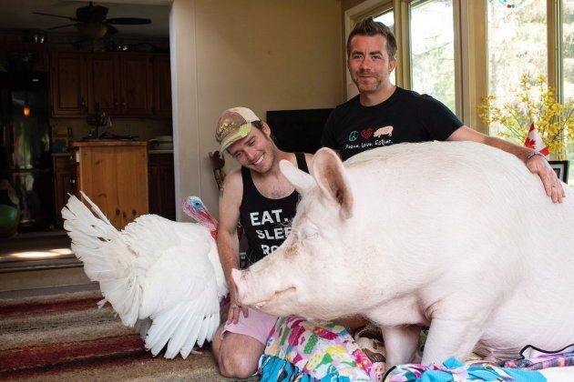 Canadian authors Steve Jenkins and Derek Walter spend time with their pig Esther and turkey Cornelius...