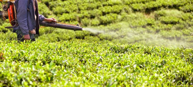 Banned pesticides can still show up in the food chain.