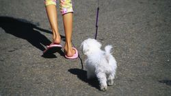 Girl, 8, Walks Her Dog 'Marshmallow' Alone, Gets Reported To