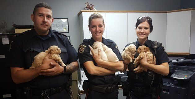 Police officers in Rivers, Man., pose with the five puppies they freed from a