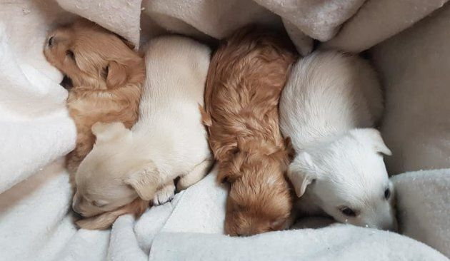 The five puppies are on the mend and will soon be available for