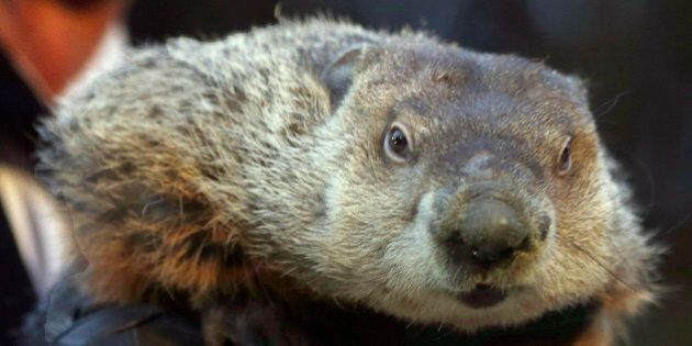 FILE - This Saturday, Feb. 2, 2013 file photo shows Groundhog Club Co-handler Ron Ploucha holding the...