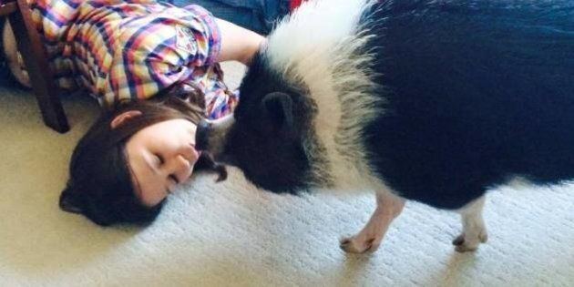 Eli The Pig Not Allowed To Stay With Edmonton