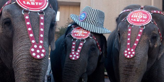 BIRMINGHAM, AL - JANUARY 21: Circus elephants entertain the crowd during Ringling Bros. 'Elephant Brunch'...