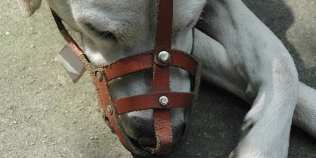 Calgary Dog Attacks Prompt Talk Of Muzzles, Fines, Breed