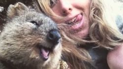 'Quokka Selfies' Are Instagram's Cutest