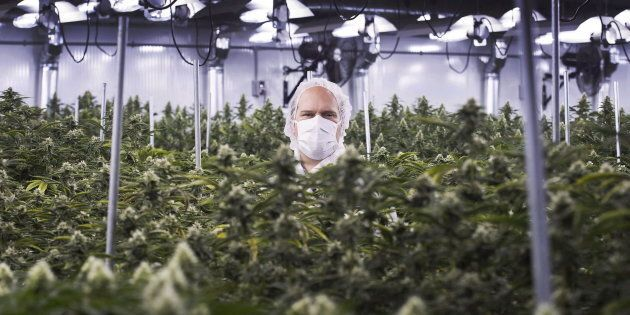 Neil Closner, then-CEO of MedReleaf, at a growing facility in Markham, Ont., Thurs. Jan. 7, 2016. The...