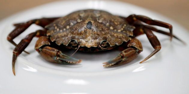 This June 6, 2018, file photo shows a green crab in Portland,