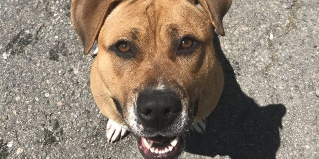 Brock, pictured, is one of only two dogs that has not been put down at a Gander shelter after a deadly...