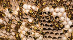 Swarm Of Wasps Stings 135 B.C. Students During Terry Fox