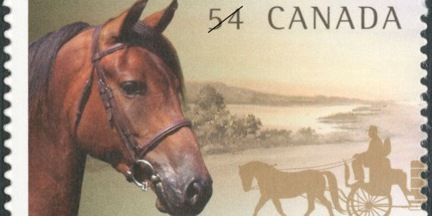 Canadian Horse On Verge Of Extinction, Warns