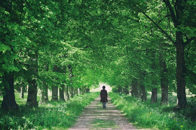 A woman walking on a road through a tree avenue with green leaves.