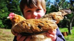 How Raising Chickens Made Me a Better