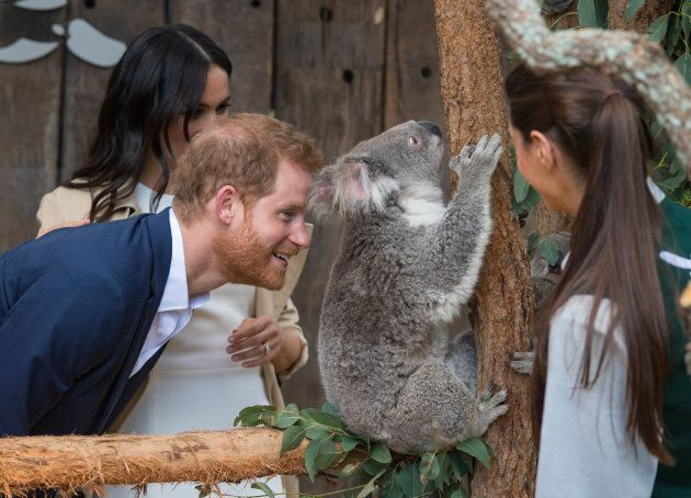 Prince Harry says hello to