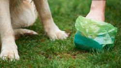 Hand Over Dog Poop Or Face Eviction: B.C.