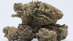 Alberta Won't Issue Any New Pot Store Licences Due To The Weed