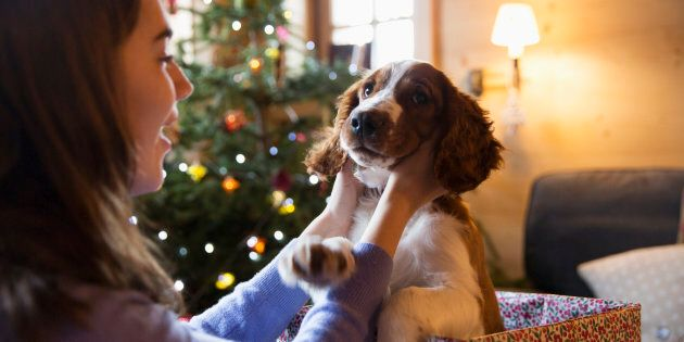 Do your due diligence before you give a pet as a Christmas gift.