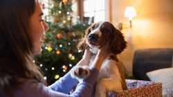 A Puppy On Christmas Might Be The Gift That Bites You In The