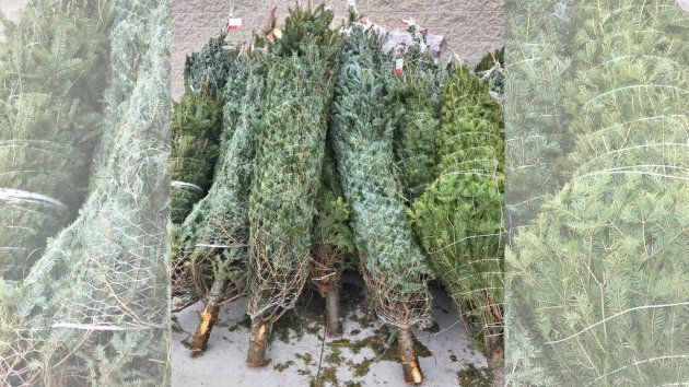 Christmas trees for sale in Maple, Ont. on Dec. 1,