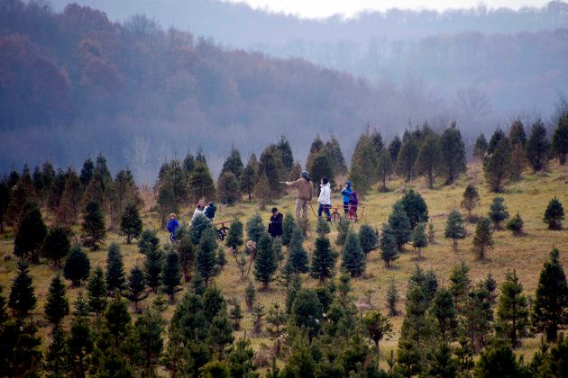 A Christmas tree farm in Harmony, Pa., on Dec. 2,