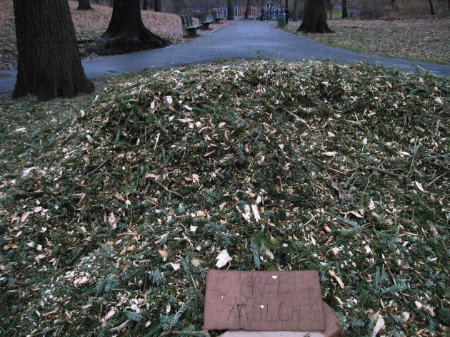 A Christmas tree recycling program in Brooklyn in January