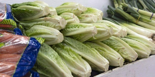 The Public Health Agency of Canada says it's probably safe to eat romaine lettuce