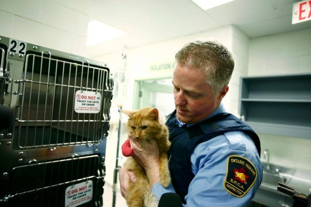 In this Nov. 27, 2009 file photo, OSPCA Inspector Kevin Strooband holds a dehydrated cat found inside...