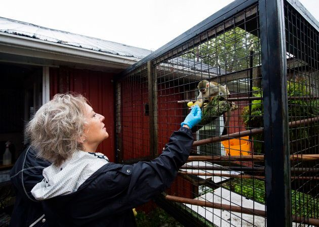Daina Liepa feeds Rudy, a squirrel monkey, at the Story Book Farm Primate Sanctuary.