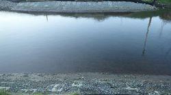 Work On Trans Mountain Pipeline Destroyed Salmon Habitat: